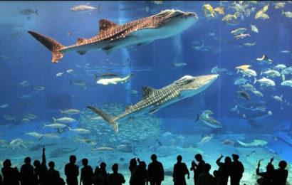 Sea Life Aquarium – Castelnuovo del Garda