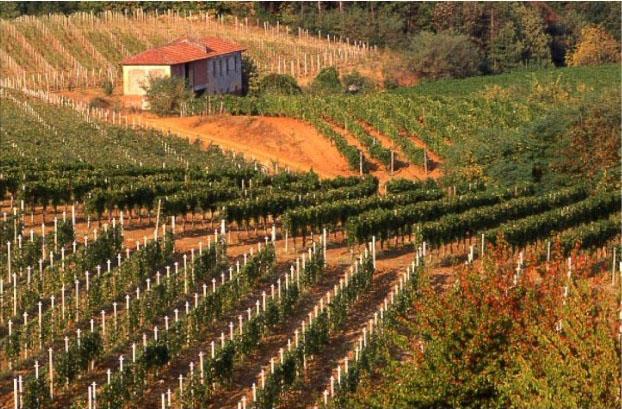 Tradizione vitivinicola in Piemonte: un sorso lungo un millennio