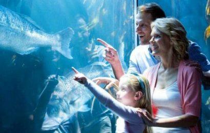 Visitare l'acquario di Genova: le meraviglie della vita